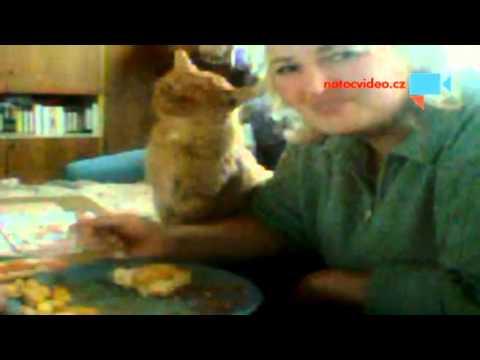 Obědvání s kocourem Matesem