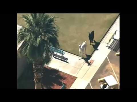 Llama chase in Sun City, AZ