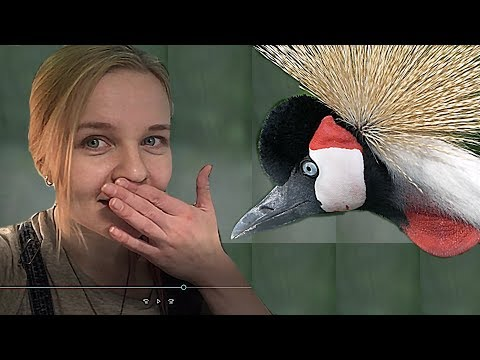От скворца и до страуса. Парк Птиц Воробьи летом