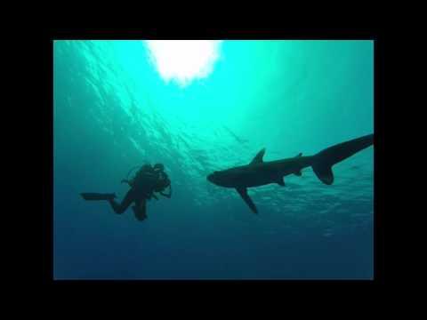 Shark & Dolphin by Francesco Ruggeri