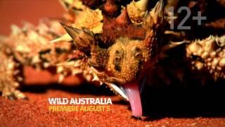Jul 25, 2014 ... Nat Geo Wild HD Europe - Amazing Adverts! - July 2014. King Of TV Sat ... 2:09. nNat Geo Wild - Dinosaurs Predators Of The Deep - National...