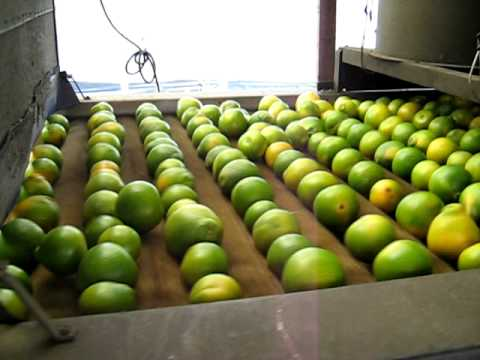 procesadora de naranjas
