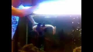 Nonton Amazing Catfish Film Subtitle Indonesia Streaming Movie Download