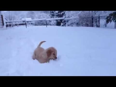 puppies's first snow