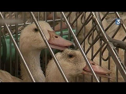 Γαλλία: Επέστρεψε η γρίπη των πτηνών