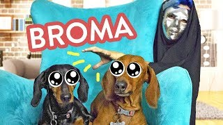 Video JOKES FOR PETS  | ARIA Y KLER | | BROMAS LOS POLINESIOS MP3, 3GP, MP4, WEBM, AVI, FLV Agustus 2018