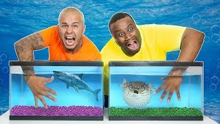 WHAT'S IN THE BOX CHALLENGE - UNDERWATER OCEAN ANIMALS!