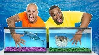 WHAT'S IN THE BOX CHALLENGE - UNDERWATER OCEAN ANIMALS!