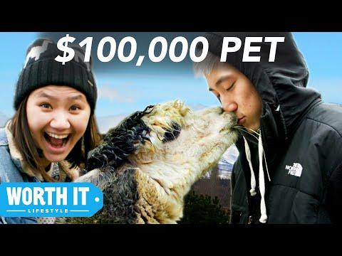 Subaru Loves Pets! - Thời lượng: 88 giây.