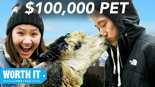 Video $17 Pet vs. $100,000 Pet MP3, 3GP, MP4, WEBM, AVI, FLV Juli 2018