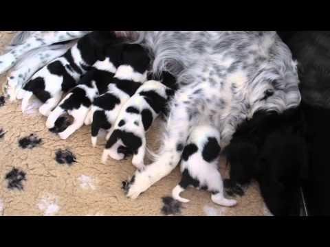 De vijfling van Orpa twee weken oud. 2