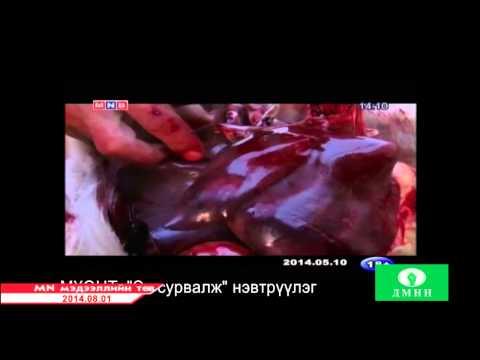 Дорноговь аймгийн Улаанбадрах сумынхан малынхаа гэдэс дотрыг идэхээ болисон