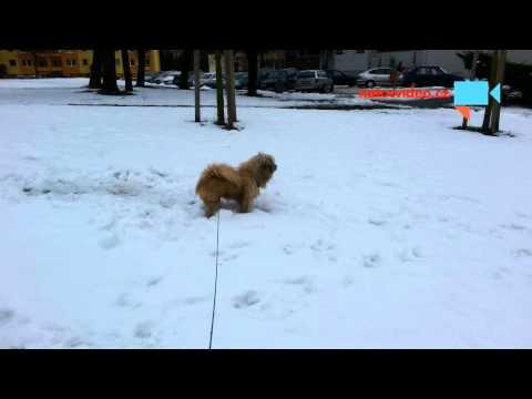 Válení ve sněhu a přílet vrtulníku