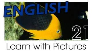 English Marine Animals Vocabulary, Learn English Vocabulary With Pictures