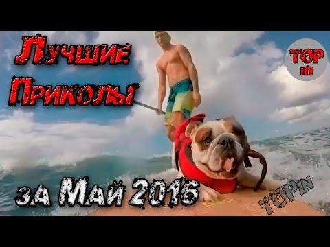 Вирусные Видео Май 2016 - DomaVideo.Ru
