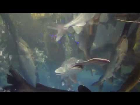Paddle Fishes In A Tank At A Restaurant In Shenzhen