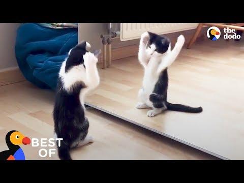 cuccioli-imbranati-alla-riscossa