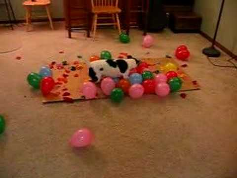 Perro rompe globos