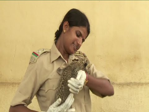 India s only Female Forest Guards | Gir National Park | Vanitha News 03 October 2015 07 29 PM