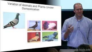 [BIOS 332] Introduction to Genetics - Jason Tresser