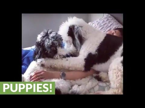 i-cani-che-amano-giocare-accanto-allumano-che-dorme