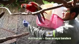 Corpoboyacá y Bioparque Wakatá dan nuevas oportunidades de vida a aves en recuperación