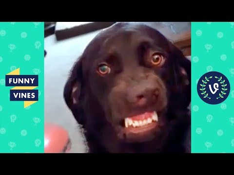 Funny animals - [50+ MIN] TRY NOT TO LAUGH - Funniest Pets & Animals  Funny Videos December 2018