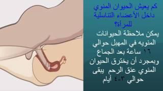 Download Video العضو التناسلى الذكرى ومعلومات خطيره Male Reproductive System MP3 3GP MP4
