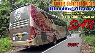 Video Naik Bus DIHADANG MONYET, TROUBLE di TENGAH HUTAN, Lewat Jembatan Kayu  Trip SAN Bengkulu - Jakarta MP3, 3GP, MP4, WEBM, AVI, FLV Oktober 2018