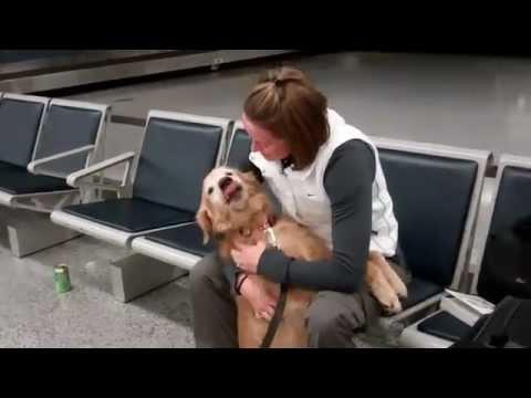 Hund begr��t Frauchen
