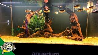 New Fish in 3 Aquariums! by Aquarium Co-Op