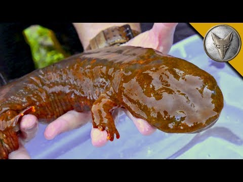 Coyote Peterson Tracks Down a Slimy Giant
