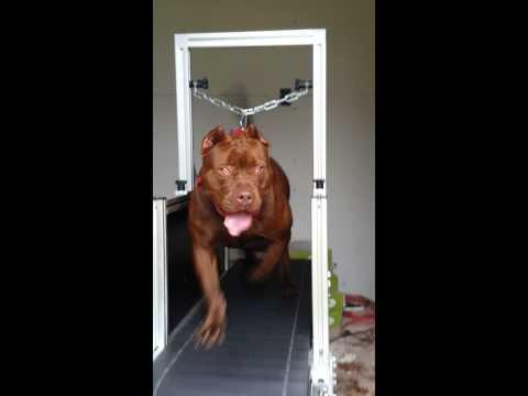 Doolittie of sc first time on treadmill