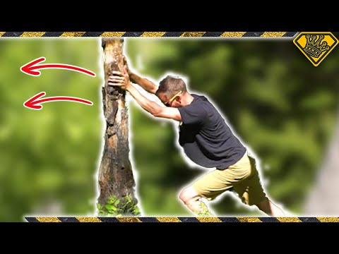 How To Cut Down a Tree With No Tools