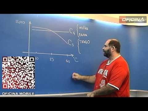 Dica de Biologia - Fotossíntese - C3 e C4 - Oficina do Estudante cursinho vestibular e colégio