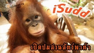 Pied Pum สวนสัตว์พาต้า - Thai Talk Show