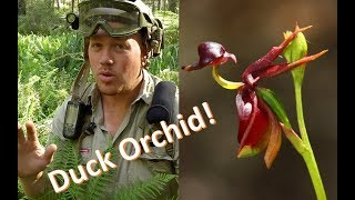 Kids for Orchids: Duck Orchid Special