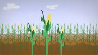 Infografisk animasjon laget i samarbeid med NMBU, som forklarer hvordan bioøkonomi kan bidra til industriell vekst i Norge.