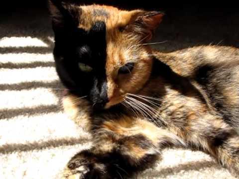 牠是全世界最知名的貓咪,看到臉就知道為什麼了!