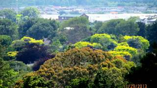Palmerston North New Zealand  City pictures : Palmerston North, NZ, views from the city
