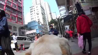 <h5>導盲犬訓練日記 (HKSEDS) </h5>