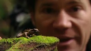 Yakushima Japan  city images : Yakushima Island Frogs - Secret Wilderness: Japan - BBC