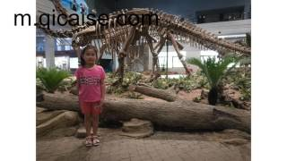 Zigong China  City new picture : ZiGong Dinosaur Museum_ angela's china trip
