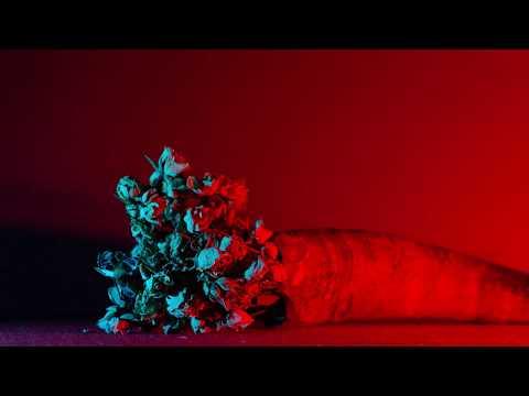 BARONESS - Seasons [OFFICIAL]