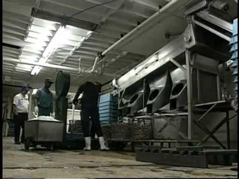 World Satellite Television News – Red Lobster – Shrimp Boycott Electronic Press Kit
