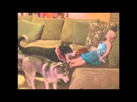 So cute: Watch as this dog tries to play fetch with a doll.