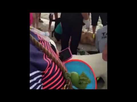Εθελοντές σώζουν σκύλο από πνιγμό
