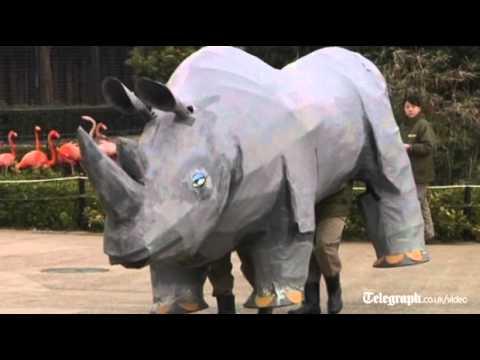 video que enseña las maniobras de la policía Japonesa para atrapar a un rinoceronte