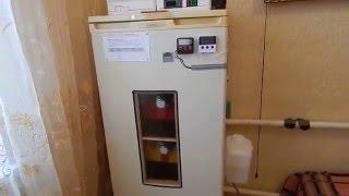 Инкубатор без терморегулятора своими руками фото