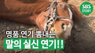 Koń – taktyk udaje, że jest martwy kiedy ma pracować